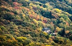 Haus in der Mitte eines Waldes lizenzfreies stockbild