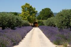 Haus in der Provence lizenzfreie stockfotos
