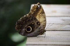 Haus der Schmetterlinge innerhalb des Parks Lizenzfreies Stockfoto