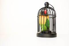 Haus gebildet aus 100 Dollarscheinen heraus Ein Papagei in der Zelle Lizenzfreie Stockfotografie