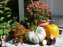 Haus: Herbstfalleintrittskürbise und -blumen Stockfotografie