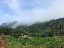 Haus im Dschungel stockbilder