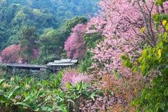 Haus im rosa Wald Stockfoto