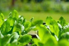 Haus machte organische Veggies lizenzfreie stockfotos