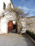 Haus mit einem kletternden Baum Stockfoto