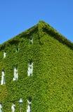 Haus mit grünen Wänden Stockfoto