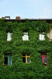 Haus mit grünen Wänden Stockbild