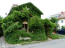 Haus mit Weinblättern und -efeu Stockfotografie