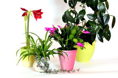 Haus pflanzt Blumen Stockfoto