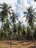 Haus tief in der Palmenwaldung lizenzfreie stockfotos