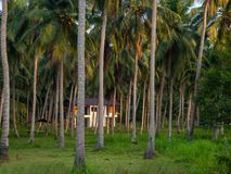 Haus tief in der Palmenwaldung stockbild