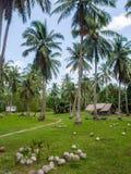 Haus tief in der Palmenwaldung lizenzfreies stockfoto