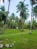 Haus tief in der Palmenwaldung stockfotografie