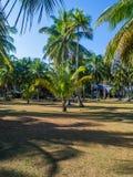 Haus tief in der Palmenwaldung lizenzfreies stockbild
