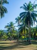 Haus tief in der Palmenwaldung lizenzfreie stockbilder