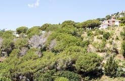 Haus umgeben durch Bäume lizenzfreies stockbild