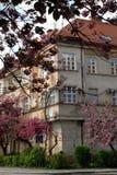 Haus-und Sakura-Bäume in der Blüte, Uzhgorod, MA Lizenzfreie Stockfotos