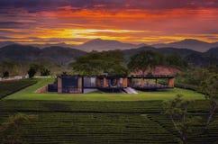 Haus und Teebauernhof während des Sonnenuntergangs Stockbilder