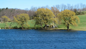 Haus und Weiden auf dem See Stockfotografie