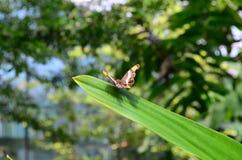 Haus von Schmetterlingen Lizenzfreies Stockfoto