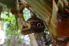 Haus von Schmetterlingen Stockbild