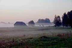 Hause在一个草甸用与雾,清早,日出的蒲公英 免版税库存图片