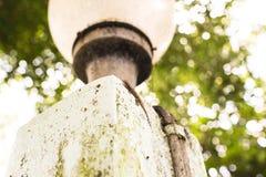 Hauseidechse mit natürlichen Lichtern Lizenzfreies Stockbild