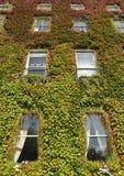 Hausfassade unter roten grünen Blättern Stockfotos