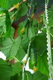 Hausgarten stockbild