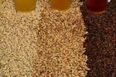Hausgebräubestandteile des Kornes und der Hopfen stockfotos