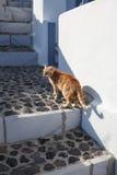 Hauskatze auf Satorini-Insel Stockfotos