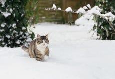 Hauskatze im Schnee lizenzfreie stockfotos