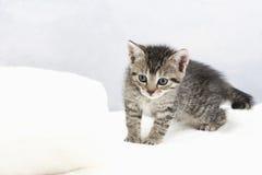 Hauskatze, Kätzchen auf weißer Decke Lizenzfreies Stockfoto