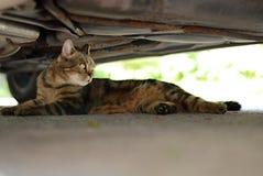 Hauskatze - unter dem Auto Stockfoto