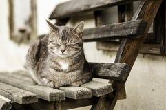 Hauskatzen 005 Lizenzfreie Stockbilder