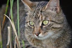 Hauskatzenjagd Lizenzfreies Stockbild