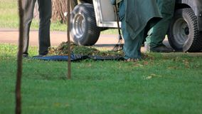 Hausmeister fegt Besen gefallene Blätter vom Gras stock footage