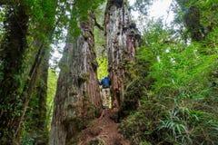 Hausse dans la forêt image stock