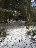Hausse dans la forêt Photographie stock