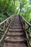 Hausse dans la forêt tropicale Photos libres de droits