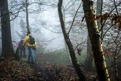 Hausse dans le bois sur une nature brumeuse 2 de jour Photo libre de droits