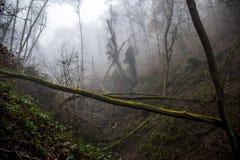 Hausse dans le bois sur une nature brumeuse de jour Image stock