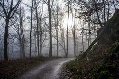 Hausse dans le bois sur une nature brumeuse 4 de jour Photos libres de droits