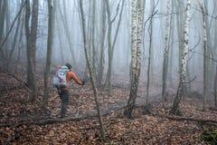 Hausse dans le bois sur une nature brumeuse 5 de jour Photographie stock