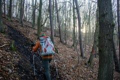 Hausse dans le bois sur une nature brumeuse 6 de jour Photos stock