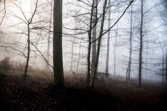 Hausse dans le bois sur une nature brumeuse 7 de jour Photographie stock