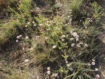 Hausse dans les belles montagnes scéniques de Kamloops photo stock