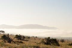 Hausse de brume sur la savane Photographie stock