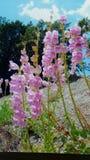 Hausse de fleurs Photo libre de droits