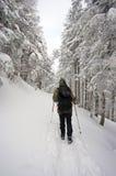 Hausse de l'hiver Photo libre de droits